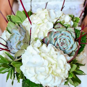 Wedding & Event Flowers - La Paloma Blanca