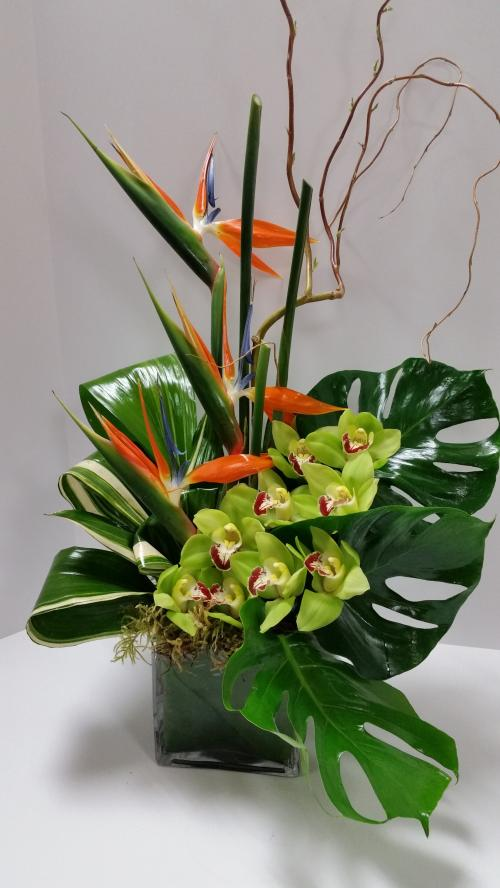 Tropical Birds in an Orchid Nest