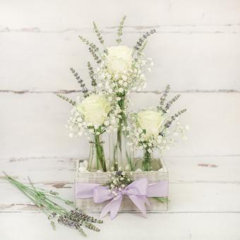 Lavender Chic Rose Trio