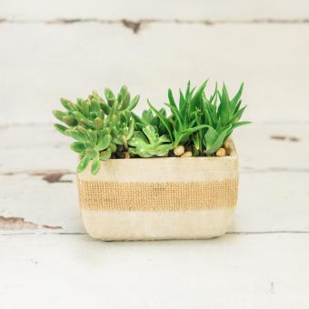 Simply Succulents